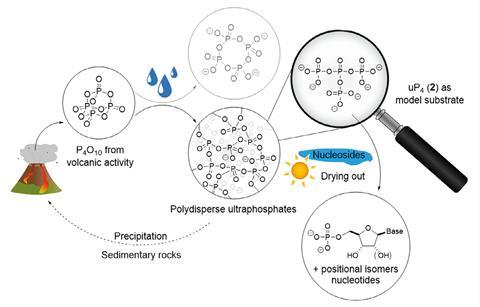 A scheme showing prebiotically plausible phosphorylation reactions using ultraphosphates